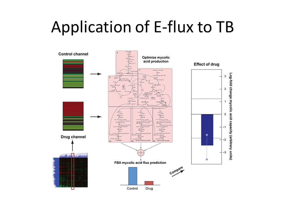 Application of E-flux to TB