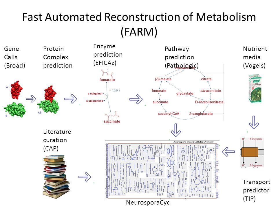 Fast Automated Reconstruction of Metabolism (FARM) Gene Calls (Broad) Protein Complex prediction Transport predictor (TIP) Pathway prediction (Pathologic) Enzyme prediction (EFICAz) Literature curation (CAP) Nutrient media (Vogels) NeurosporaCyc