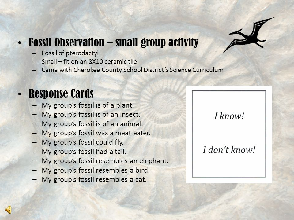 Fossil Observation – small group activity – Fossil of pterodactyl – Small – fit on an 8X10 ceramic tile – Came with Cherokee County School District's Science Curriculum Response Cards – My group's fossil is of a plant.