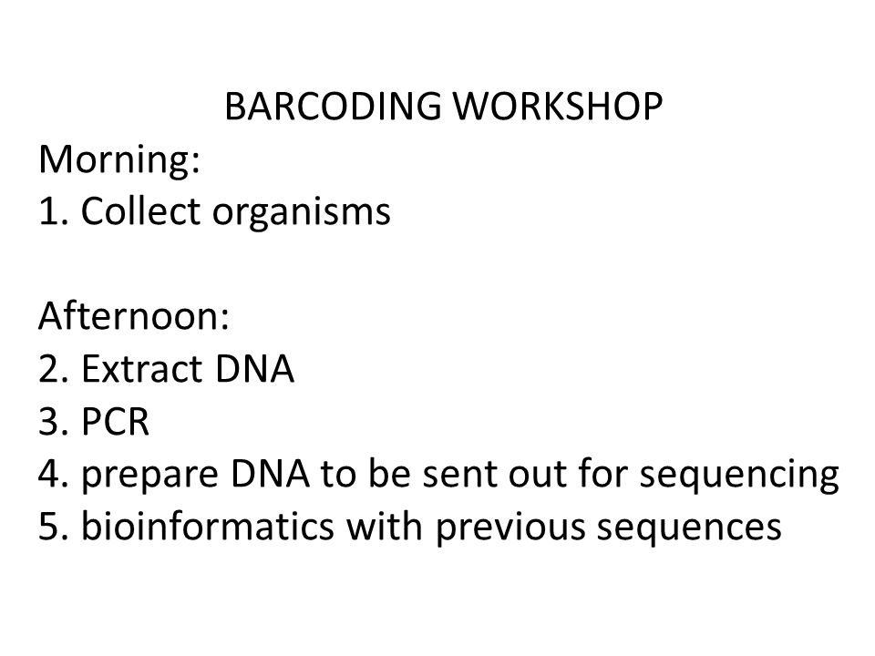 BARCODING WORKSHOP Morning: 1. Collect organisms Afternoon: 2. Extract DNA 3. PCR 4. prepare DNA to be sent out for sequencing 5. bioinformatics with