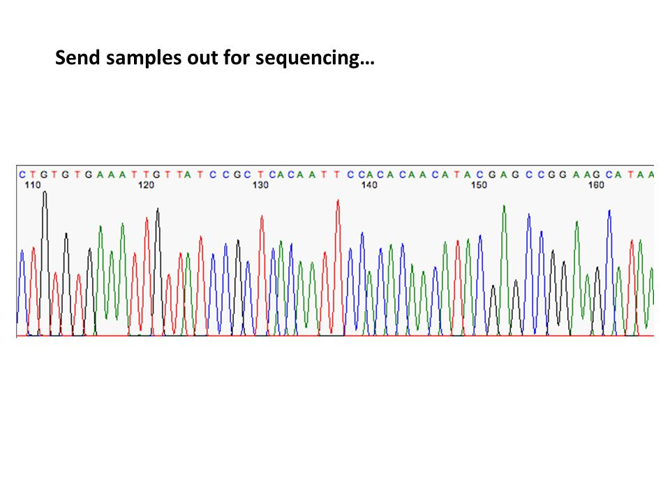 Send samples out for sequencing…