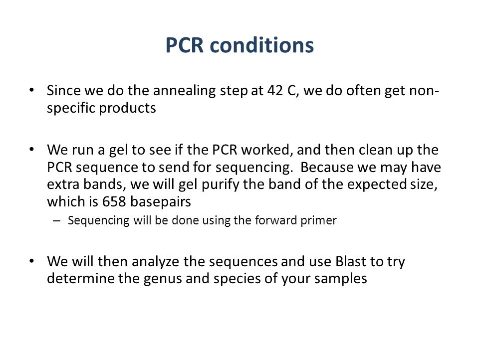 PCR conditions Since we do the annealing step at 42 C, we do often get non- specific products We run a gel to see if the PCR worked, and then clean up
