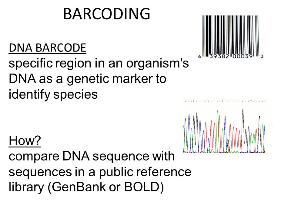 BARCODING DNA BARCODE specific region in an organism's DNA as a genetic marker to identify species How? compare DNA sequence with sequences in a publi