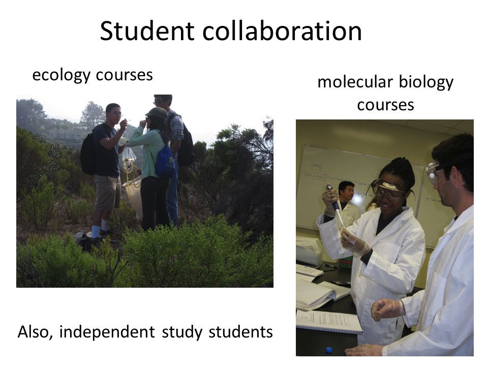 Student collaboration ecology courses molecular biology courses Also, independent study students