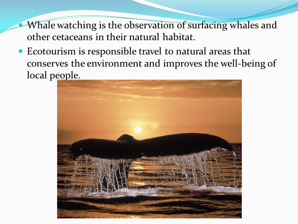History Whale Watching begun in the 1950s off the coast of California.