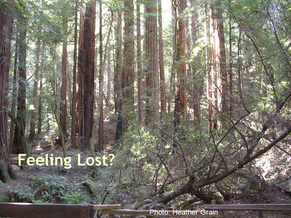 Feeling Lost? Photo: Heather Grain