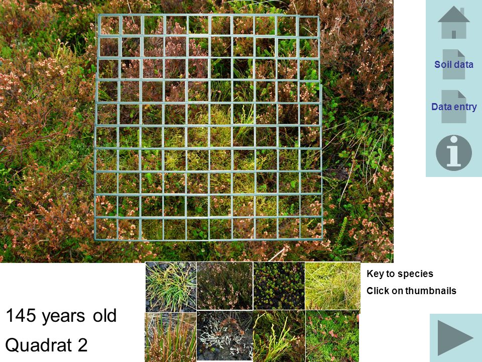 Soil data Data entry 145 years old Quadrat 2 Key to species Click on thumbnails