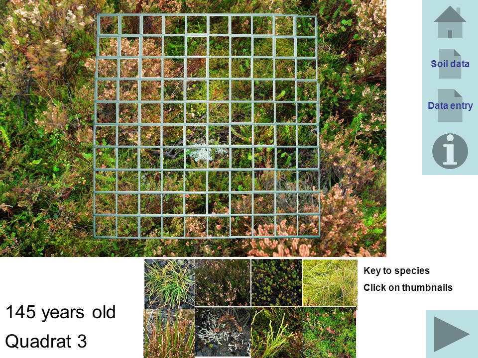 Soil data Data entry 145 years old Quadrat 3 Key to species Click on thumbnails