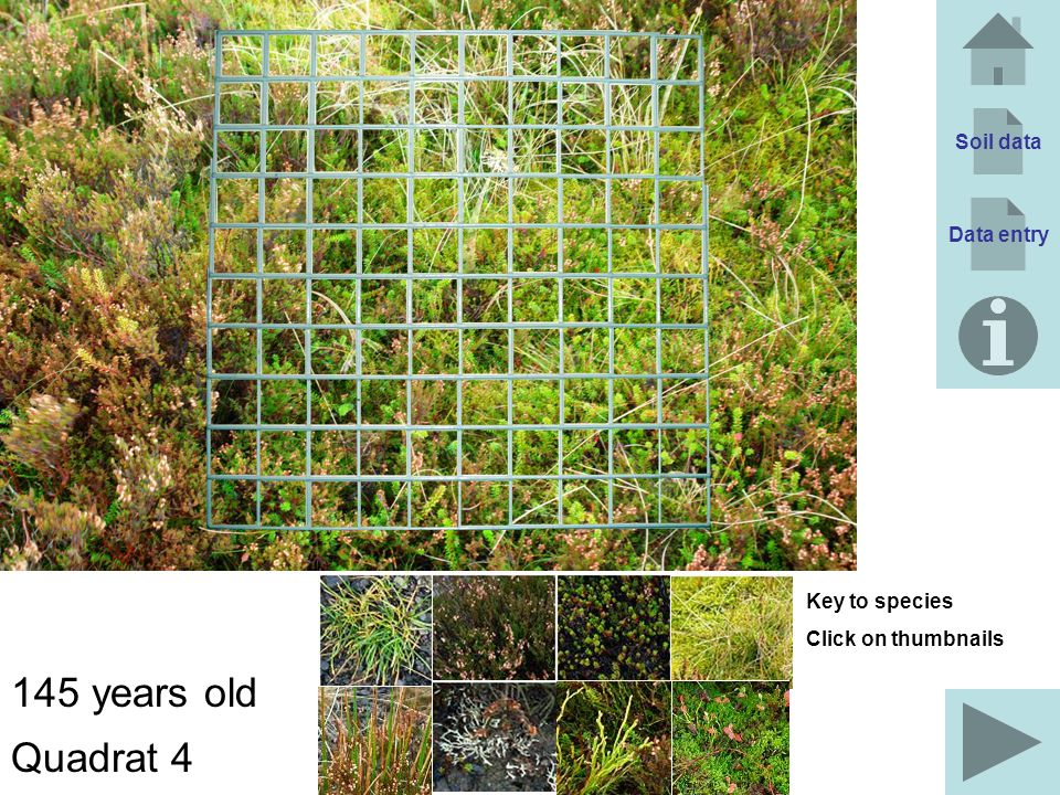Soil data Data entry 145 years old Quadrat 4 Key to species Click on thumbnails