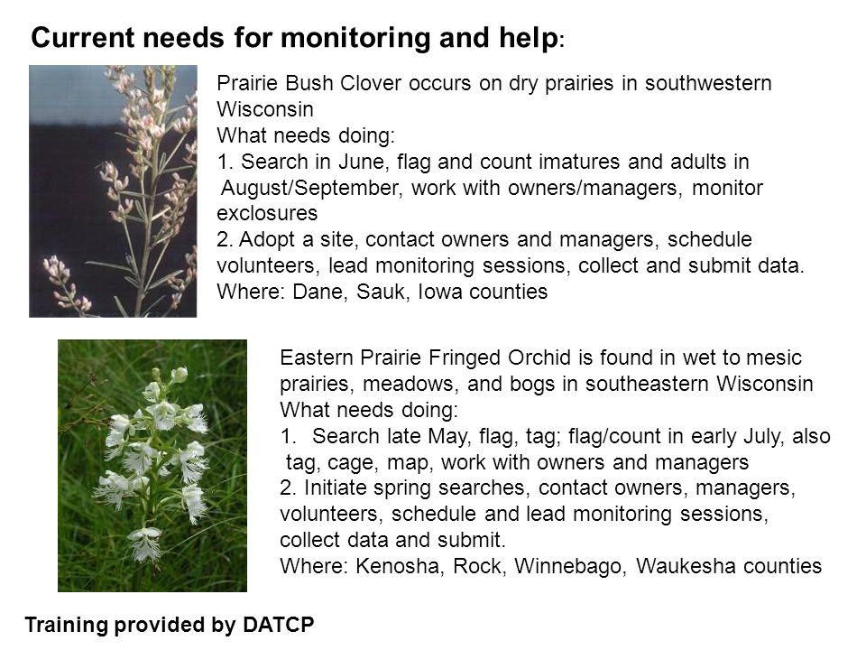 Current needs for monitoring and help : Prairie Bush Clover occurs on dry prairies in southwestern Wisconsin What needs doing: 1.