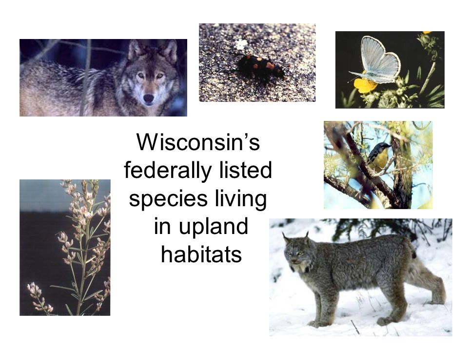 Wisconsin's federally listed species living in upland habitats