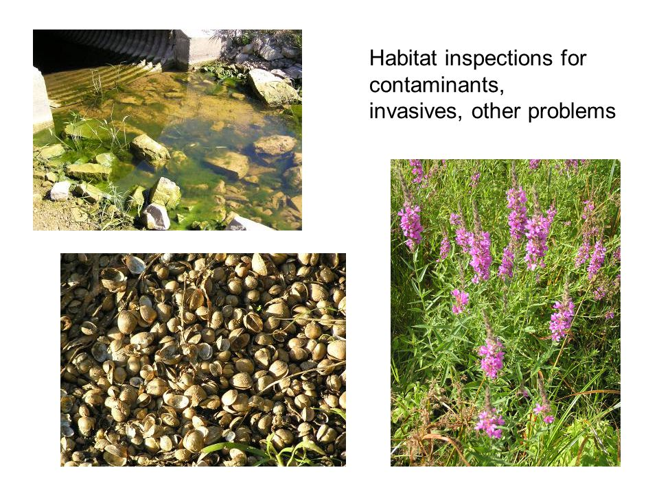 Habitat inspections for contaminants, invasives, other problems