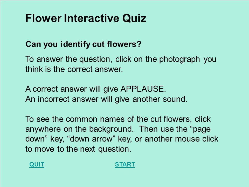 Which is lisianthus? DaffodilGladiolusLisianthus