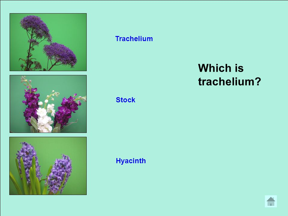 Which is heather HeatherDutch IrisLiatris