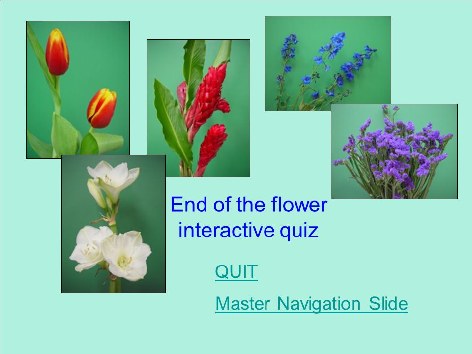 Which is tuberose Tuberose Calla lily Gardenia