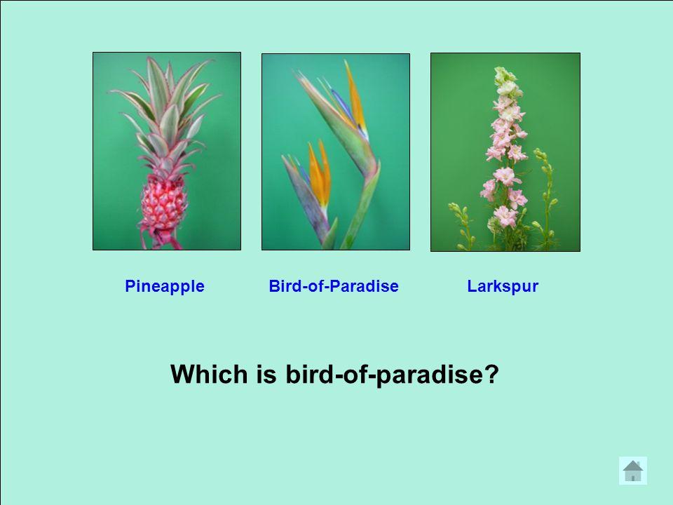 Which is liatris? GenistaGingerLiatris