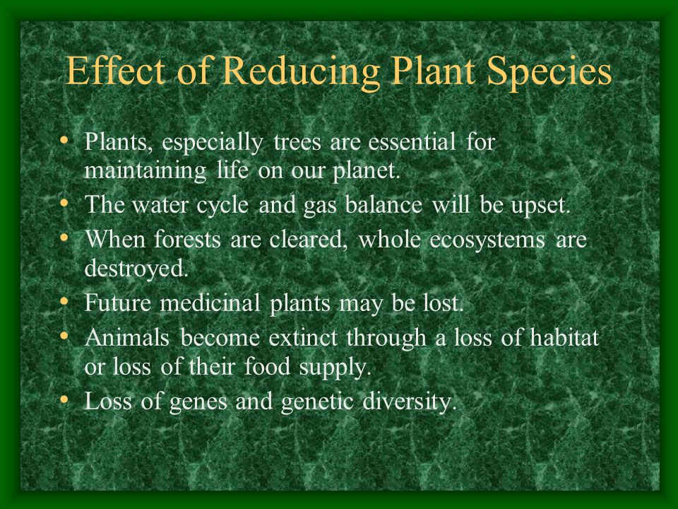 Effect of Reducing Plant Species Plants, especially trees are essential for maintaining life on our planet.