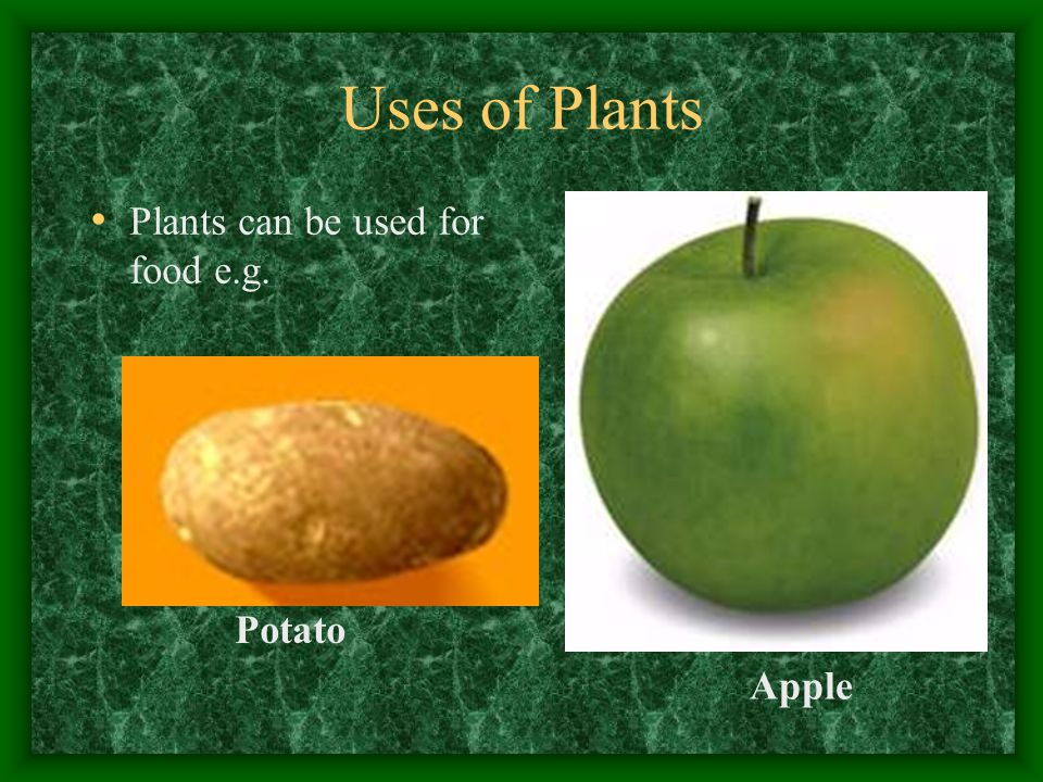 Uses of Plants Plants can be used for food e.g. Potato Apple