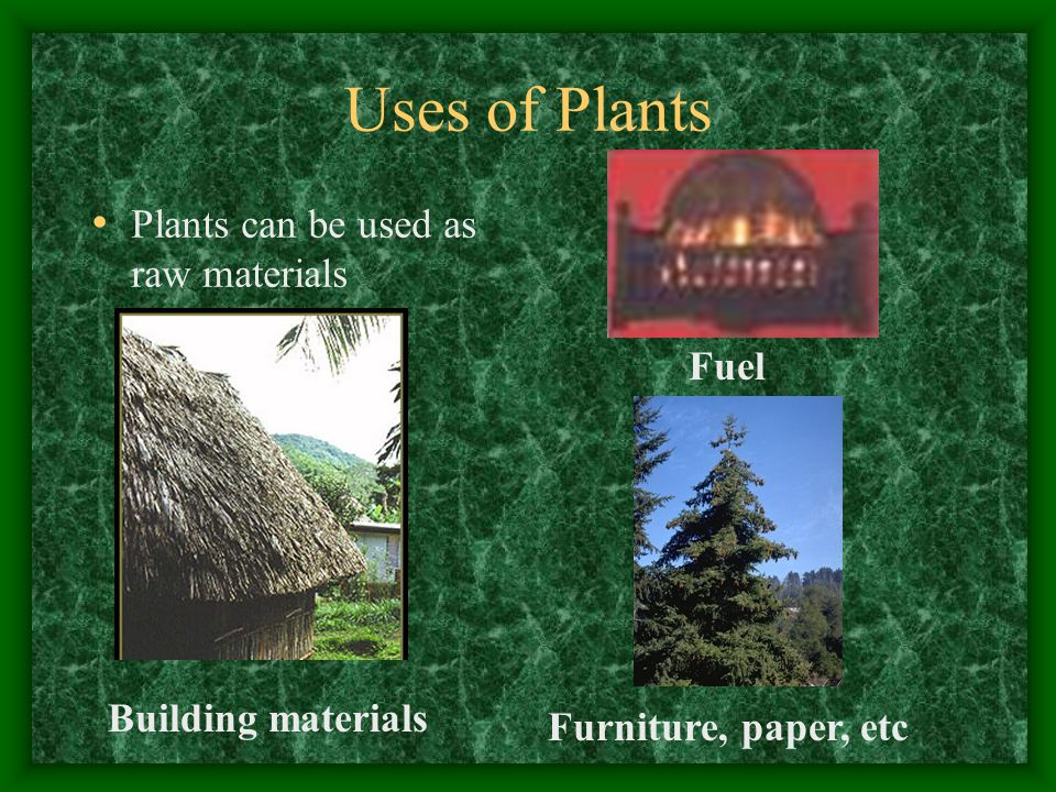 Uses of Plants Plants can be used as raw materials Building materials Fuel Furniture, paper, etc