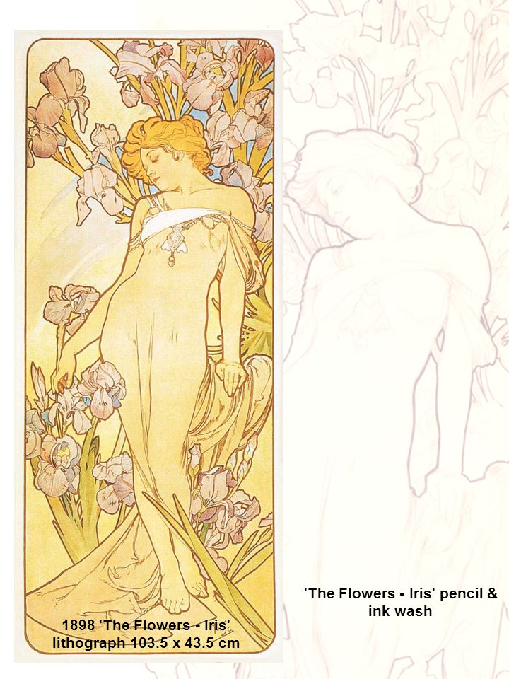 1898 'The Flowers - Iris' lithograph 103.5 x 43.5 cm 'The Flowers - Iris' pencil & ink wash