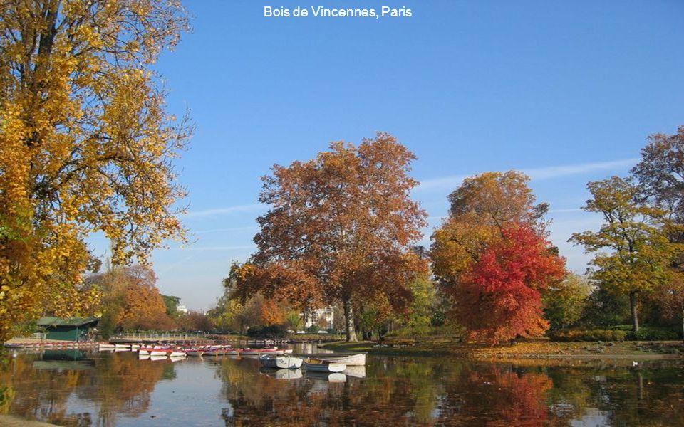 Autumn s Beauty, Ontario