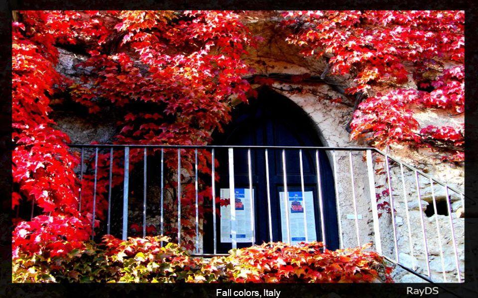 Beautiful fall colors, South Corea