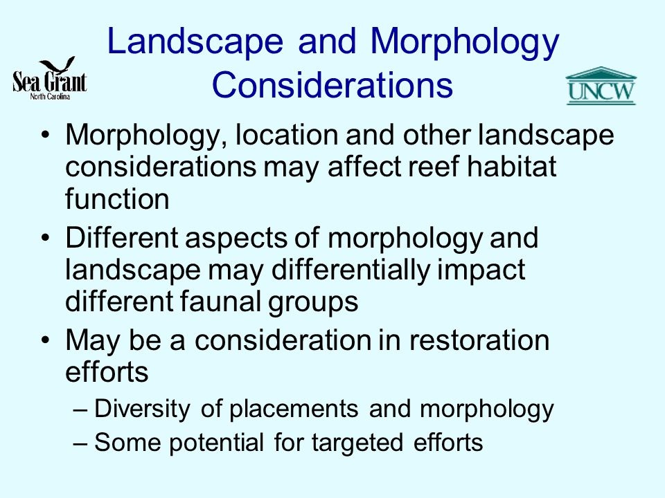 Landscape and Morphology Considerations Morphology, location and other landscape considerations may affect reef habitat function Different aspects of morphology and landscape may differentially impact different faunal groups May be a consideration in restoration efforts –Diversity of placements and morphology –Some potential for targeted efforts