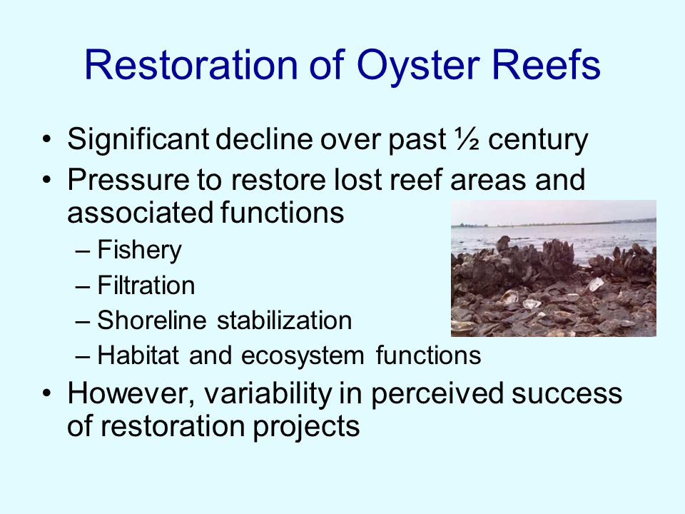 Restoration of Oyster Reefs Significant decline over past ½ century Pressure to restore lost reef areas and associated functions –Fishery –Filtration