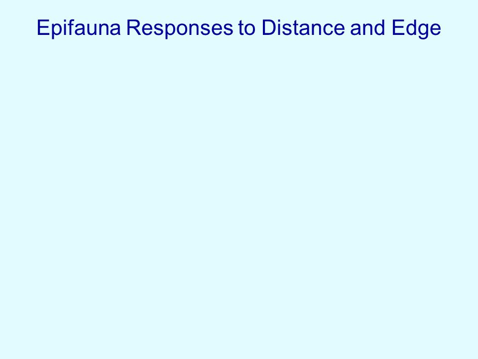 Epifauna Responses to Distance and Edge