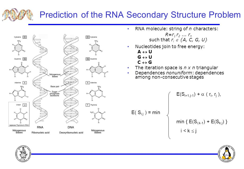 Prediction of the RNA Secondary Structure Problem RNA molecule: string of n characters: R=r 1 r 2...