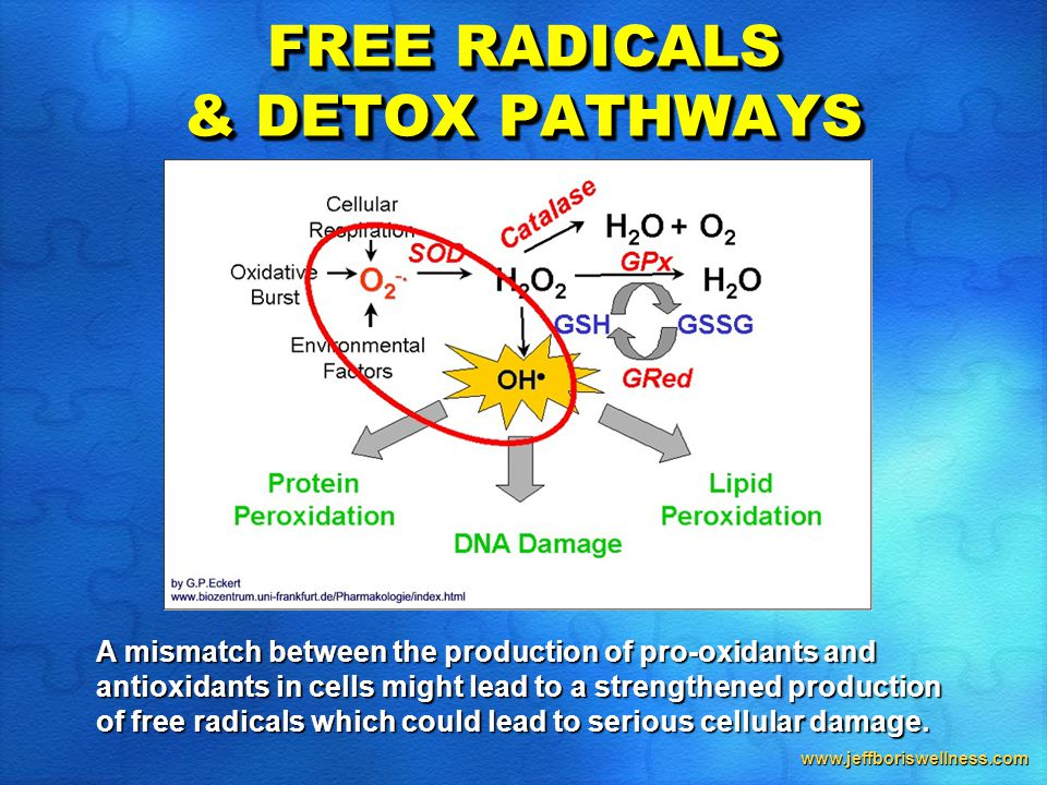 www.jeffboriswellness.com FREE RADICALS & DETOX PATHWAYS A mismatch between the production of pro-oxidants and antioxidants in cells might lead to a strengthened production of free radicals which could lead to serious cellular damage.