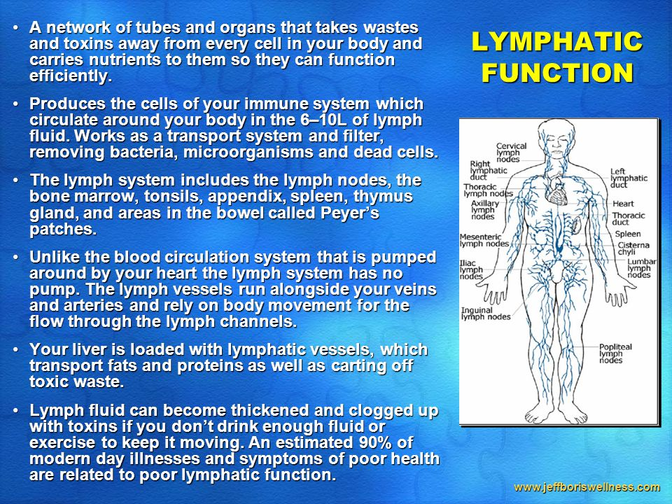 www.jeffboriswellness.com LYMPHATIC FUNCTION A network of tubes and organs that takes wastes and toxins away from every cell in your body and carries nutrients to them so they can function efficiently.A network of tubes and organs that takes wastes and toxins away from every cell in your body and carries nutrients to them so they can function efficiently.