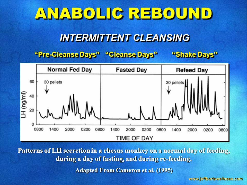 www.jeffboriswellness.com ANABOLIC REBOUND Patterns of LH secretion in a rhesus monkey on a normal day of feeding, during a day of fasting, and during re-feeding.