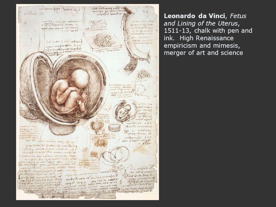 Leonardo da Vinci, Fetus and Lining of the Uterus, 1511-13, chalk with pen and ink. High Renaissance empiricism and mimesis, merger of art and science