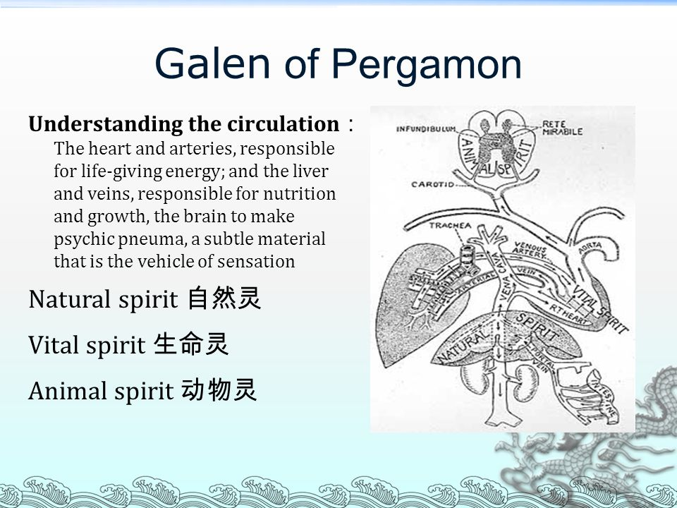 Galen of Pergamon Understanding the circulation : The heart and arteries, responsible for life-giving energy; and the liver and veins, responsible for