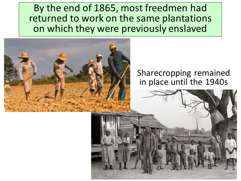 By the end of 1865, most freedmen had returned to work on the same plantations on which they were previously enslaved Sharecropping remained in place
