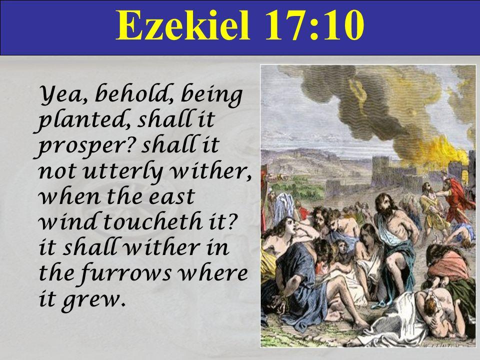 Ezekiel 17:10 Yea, behold, being planted, shall it prosper.