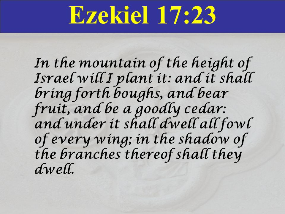 Ezekiel 17:23 In the mountain of the height of Israel will I plant it: and it shall bring forth boughs, and bear fruit, and be a goodly cedar: and und