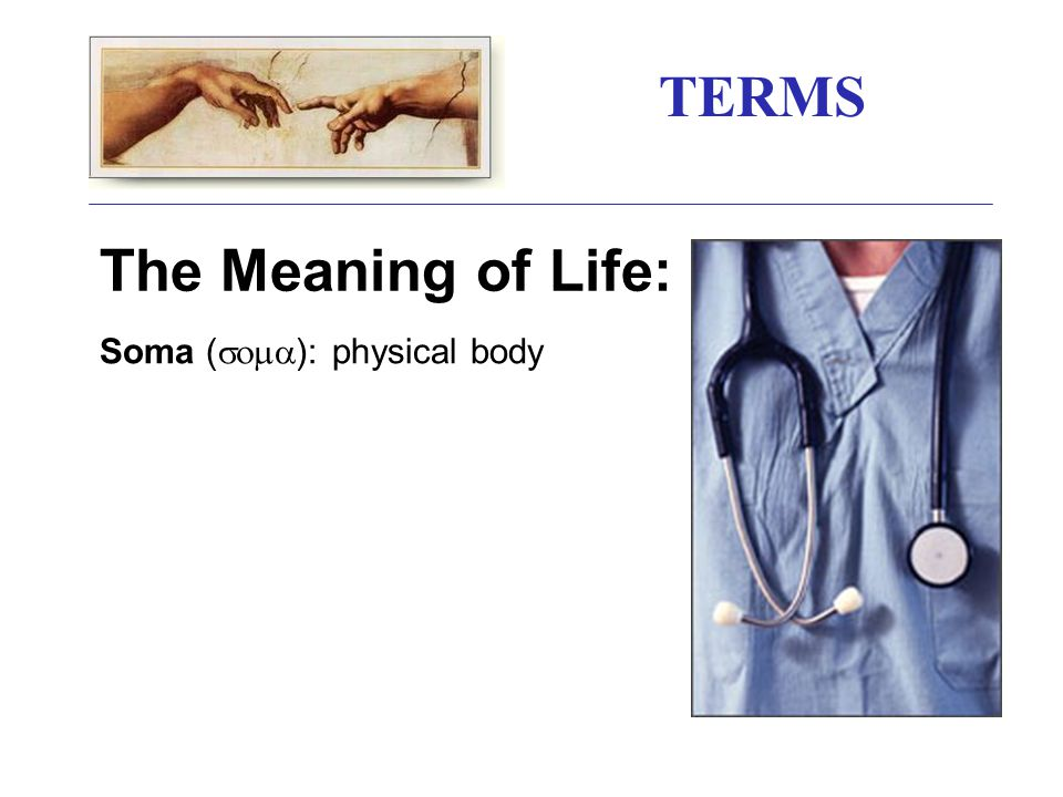 TERMS The Meaning of Life: Soma (  ): physical body