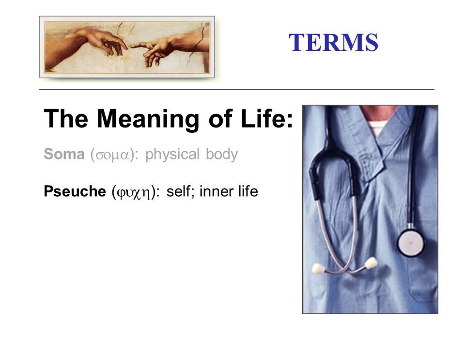 TERMS The Meaning of Life: Soma (  ): physical body Pseuche (  ): self; inner life