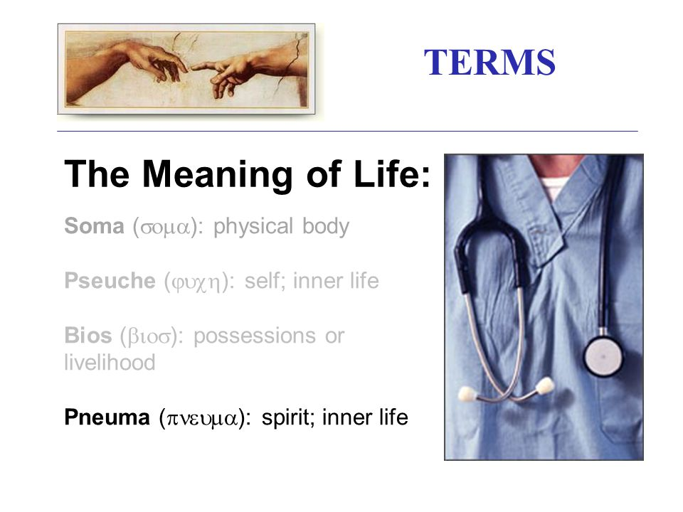 TERMS The Meaning of Life: Soma (  ): physical body Pseuche (  ): self; inner life Bios (  ): possessions or livelihood Pneuma (  ): spirit; inner life