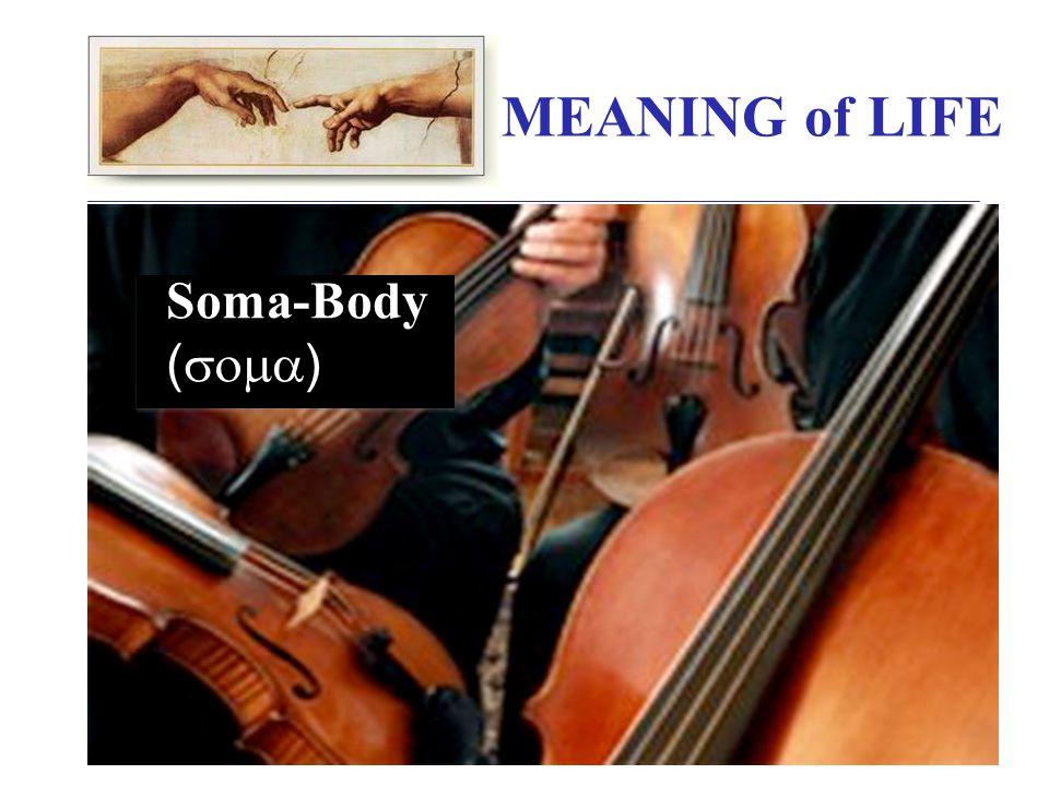 Soma-Body (  )