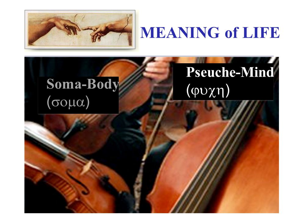 MEANING of LIFE Soma-Body (  ) Pseuche-Mind (  )