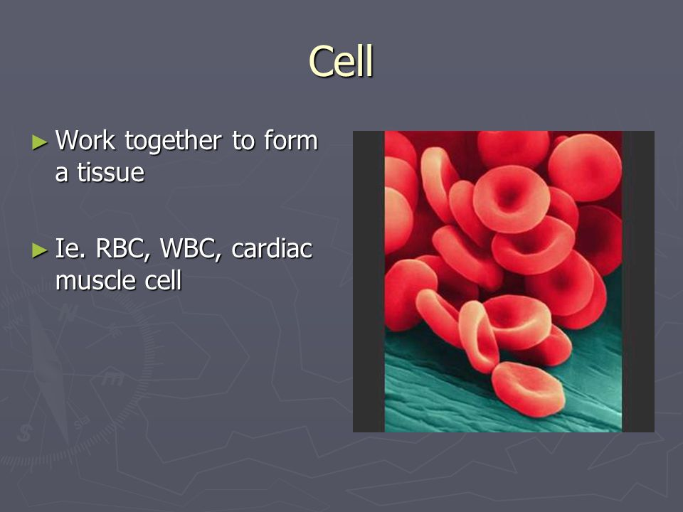 Cell ► Work together to form a tissue ► Ie. RBC, WBC, cardiac muscle cell
