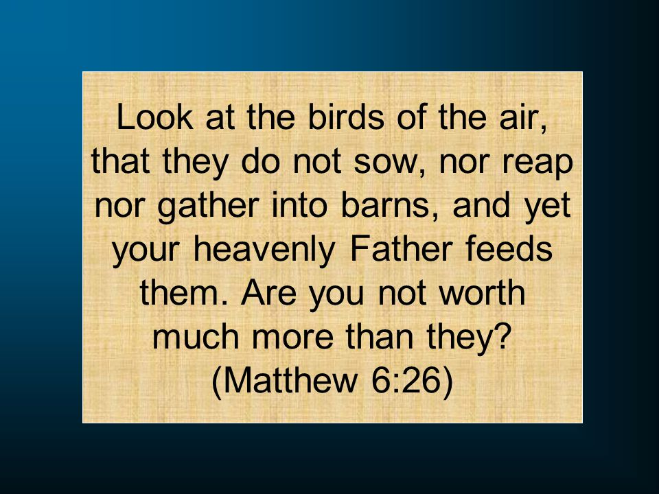 Look at the birds of the air, that they do not sow, nor reap nor gather into barns, and yet your heavenly Father feeds them.