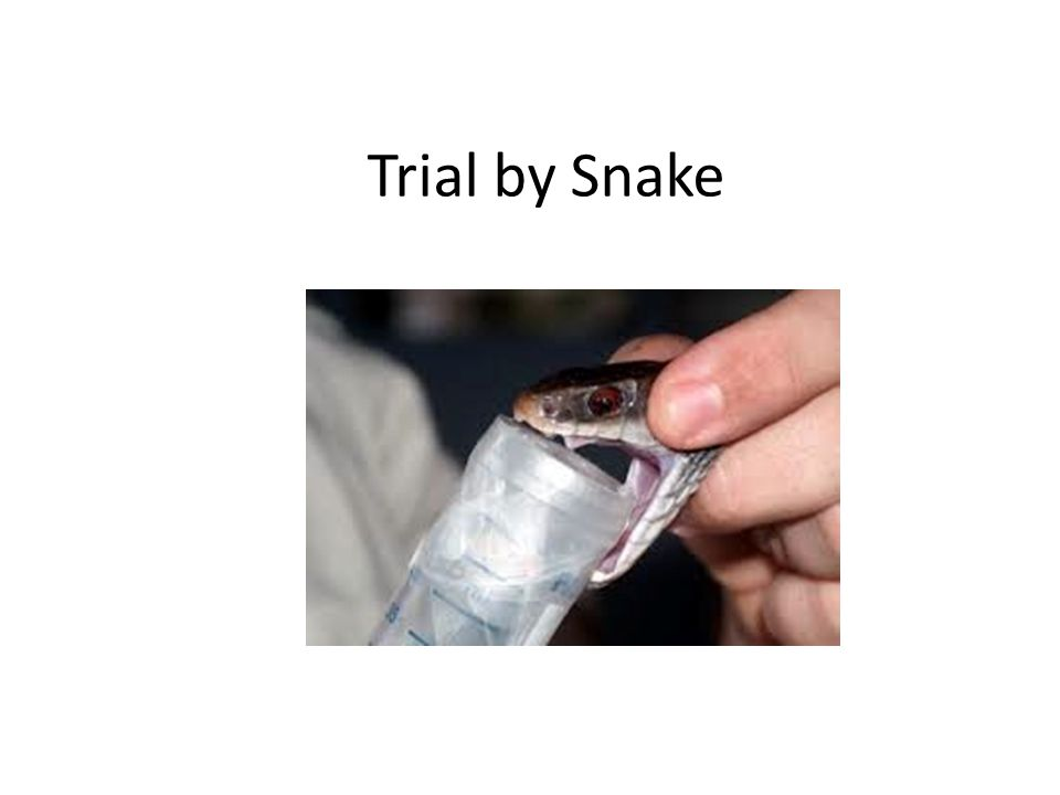 Trial by Snake