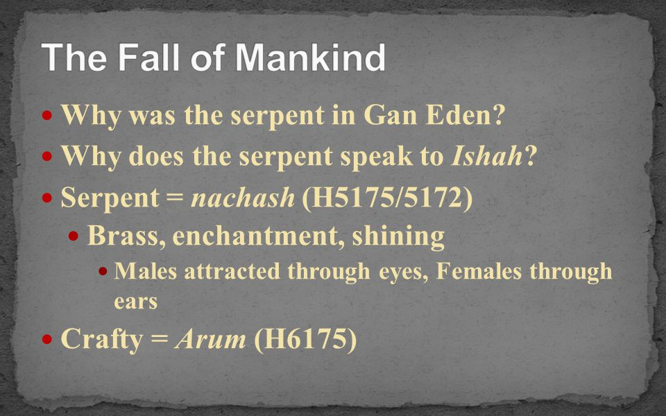 Why was the serpent in Gan Eden? Why does the serpent speak to Ishah? Serpent = nachash (H5175/5172) Brass, enchantment, shining Males attracted throu