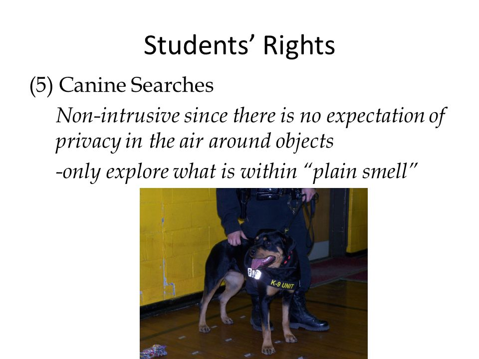 Students' Rights (5) Canine Searches Non-intrusive since there is no expectation of privacy in the air around objects -only explore what is within plain smell