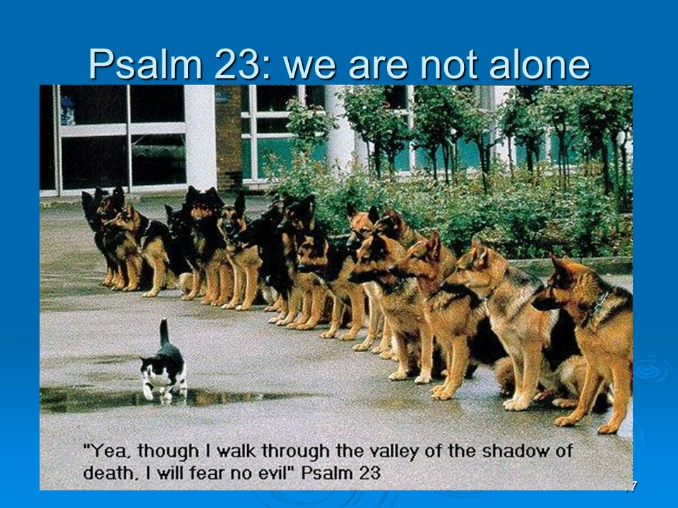 17 Psalm 23: we are not alone
