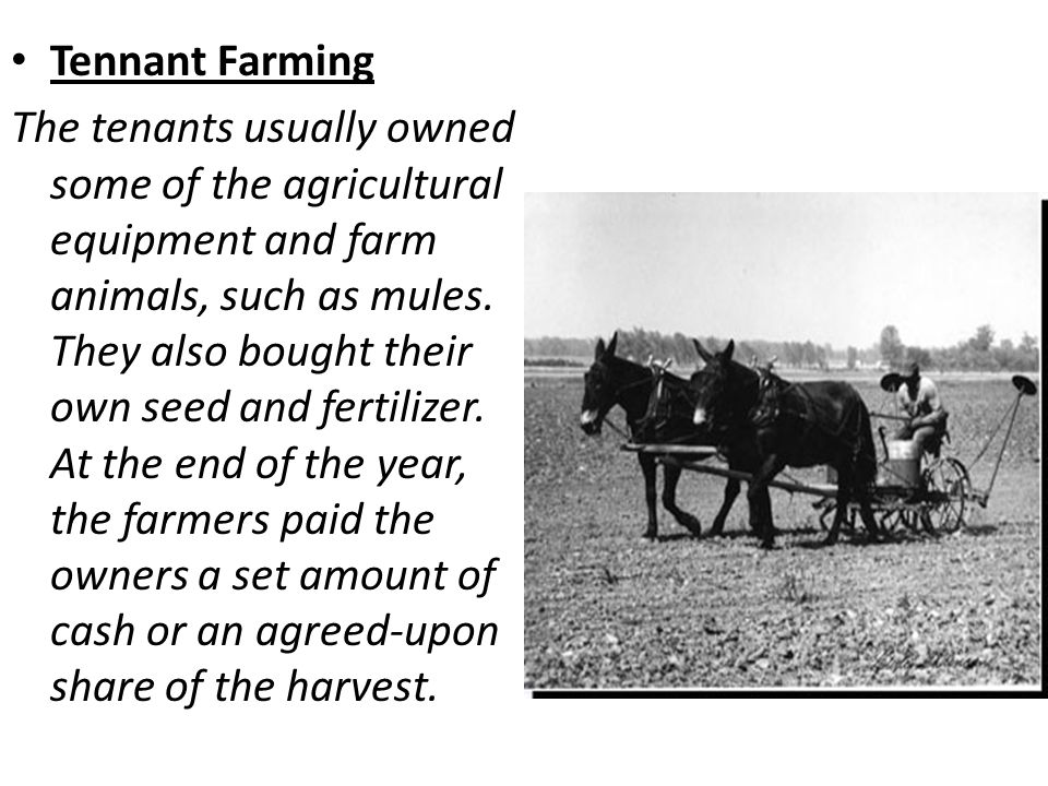 Tennant Farming The tenants usually owned some of the agricultural equipment and farm animals, such as mules.